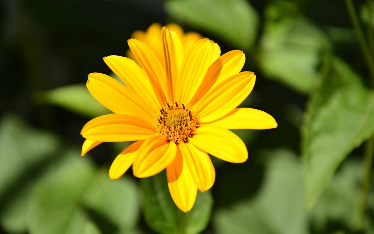 Photos for free yellow, petals, green - to the desktop
