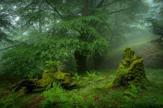 Обои деревья, туман высокого качества