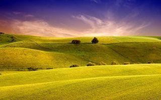 Фото бесплатно поля, всходы, зеленые, деревья, кустарник, небо, облака