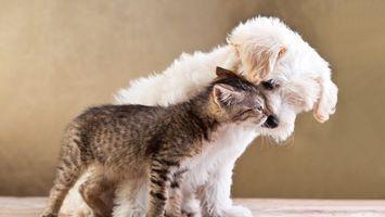 Фото бесплатно собака, котенок, друзья