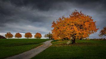 Фото бесплатно осень, поле, дорога, тучи, деревья, пейзаж