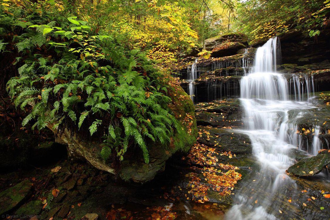 Обои лес, папоротник, вода картинки на телефон