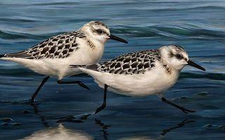 Заставки птички, клювы, хвосты
