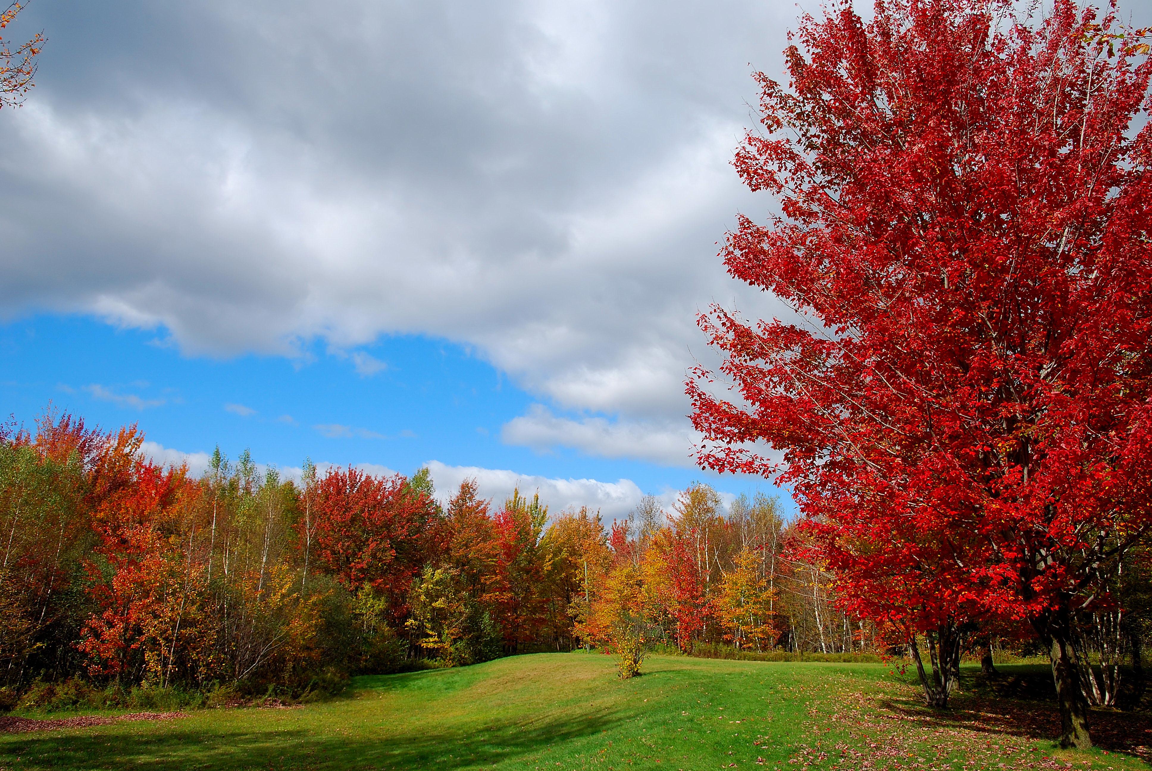 обои осень, поле, деревья, пейзаж картинки фото