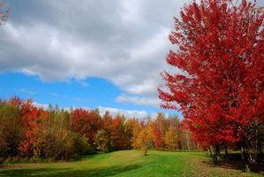 Бесплатные фото осень, поле, деревья, пейзаж