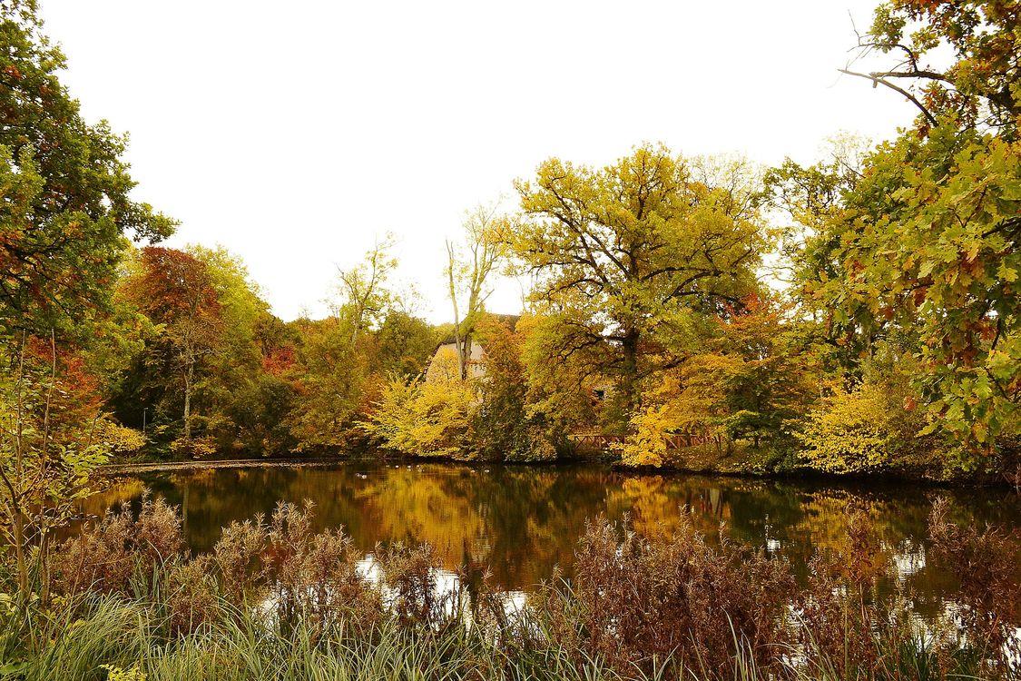 Посмотреть фото осень, деревья