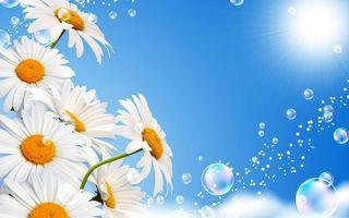 Бесплатные фото ромашки,лепестки,белые,пузыри,небо,солнце