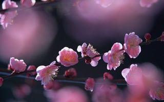 Фото бесплатно весна, дерево, ветви