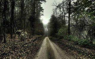 Бесплатные фото лес,дорога,деревья,кустарник,листва,небо