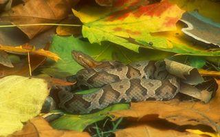 Фото бесплатно змея, шкура, чешуя, окрас, узор, листва