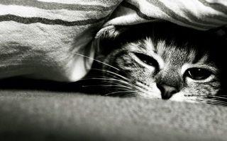 Бесплатные фото кошка,морда,глаза,шерсть,одеяло,черно-белое