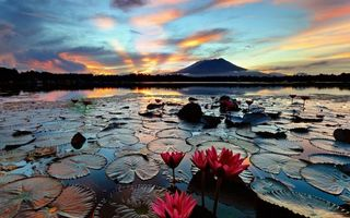 Photo free water lilies, lake, volcano