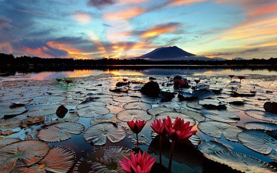 Фото бесплатно кувшинки, озеро, вулкан