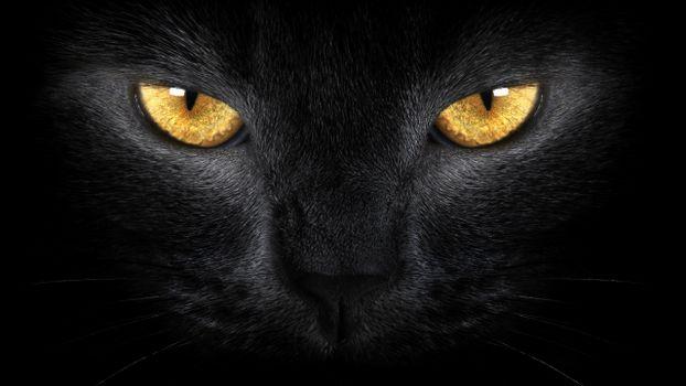 Фото бесплатно желтый, черный, нос
