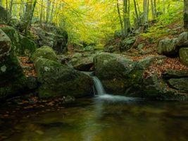 Бесплатные фото осень,лес,деревья,водопад,природа