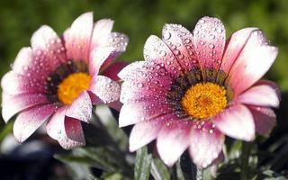 Бесплатные фото цветочки,лепестки,капли,роса,листья