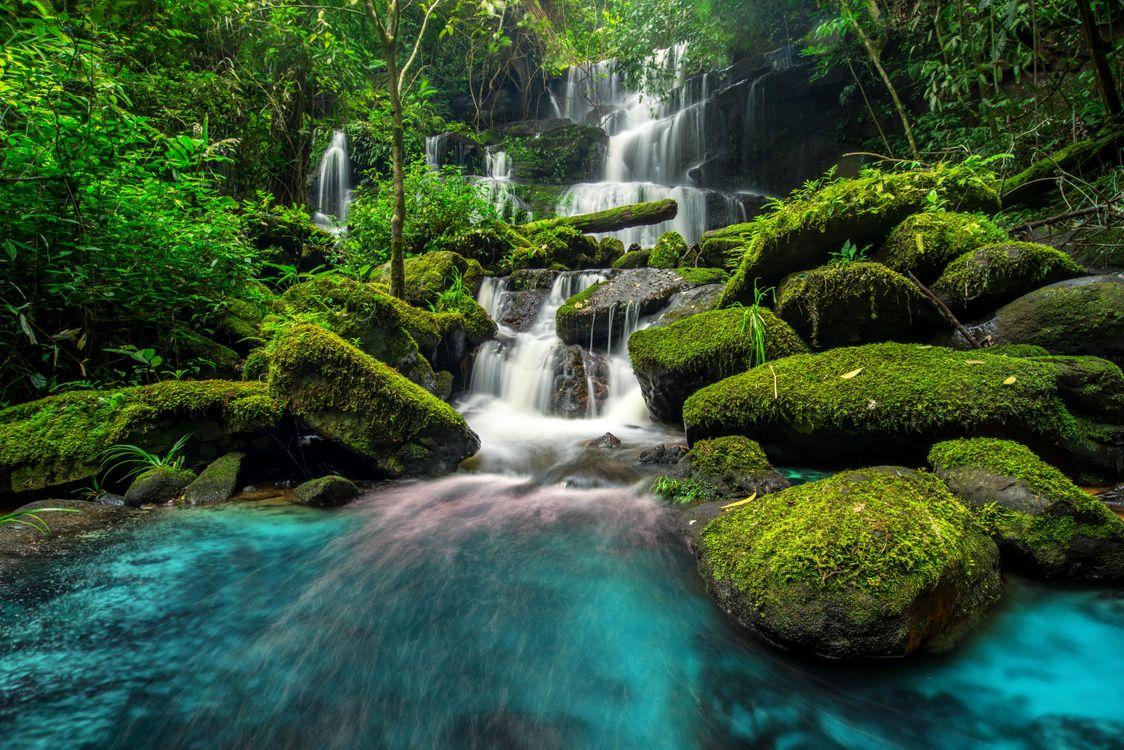 Скачать лес, водопад картинки бесплатно