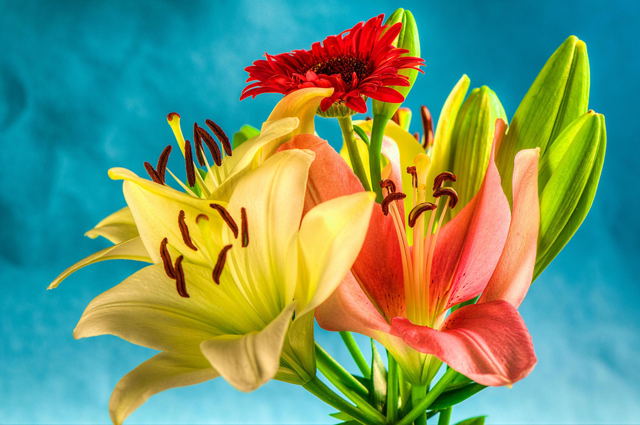 обои букет, цветы, лилии, флора картинки фото