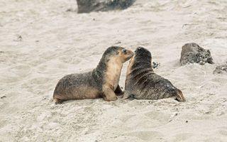 Бесплатные фото побережье,песок,камни,морские котики,ласты,шерсть