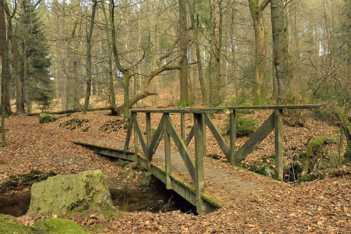 Фото бесплатно осень, лес, деревья, мост, природа, природа