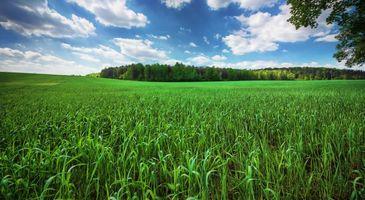 Бесплатные фото поле, трава, деревья, пейзаж