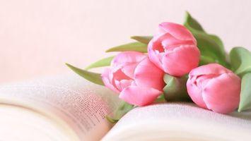 Бесплатные фото книга,цветы,тюльпаны,бутоны,лепестки,листья