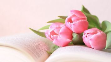 Фото бесплатно книга, цветы, тюльпаны