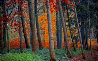 Бесплатные фото лес,осень,лиственница,деревья