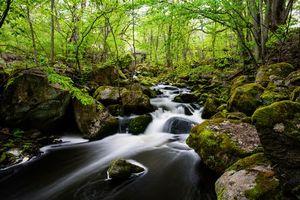 Заставки лес, река, камни