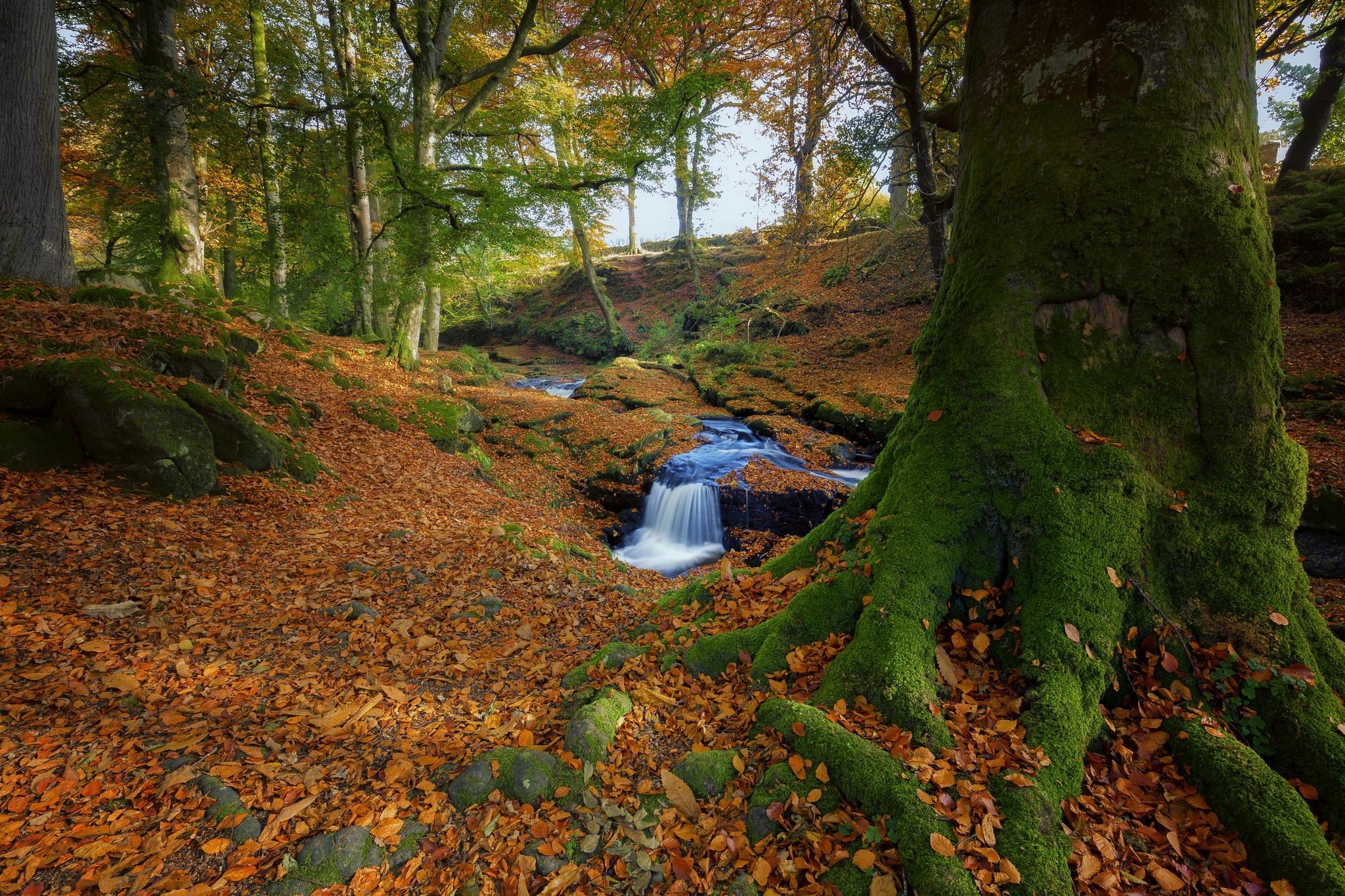 обои осень, лес, деревья, речка картинки фото