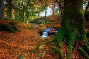 Бесплатные фото осень,лес,деревья,речка,ручей,водопад,природа