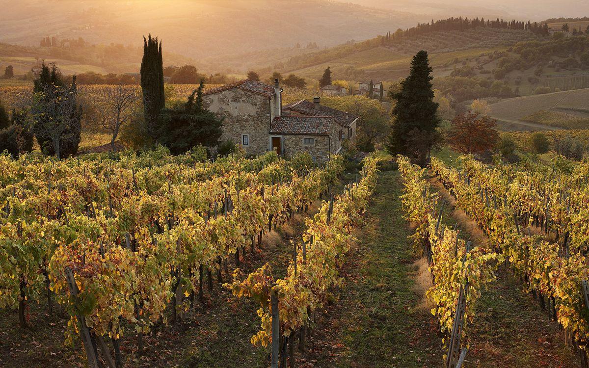 Фото бесплатно виноградники, лоза, дом, деревья, холмы, сопки, пейзажи