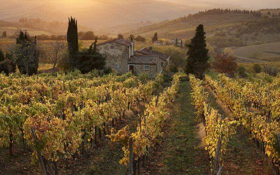 Фото бесплатно виноградники, лоза, дом, деревья, холмы, сопки