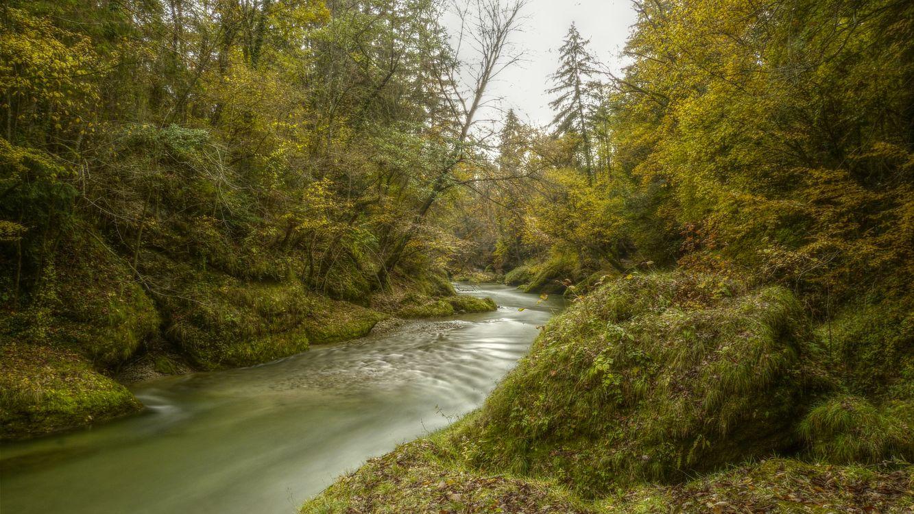 река лес  № 2789186  скачать