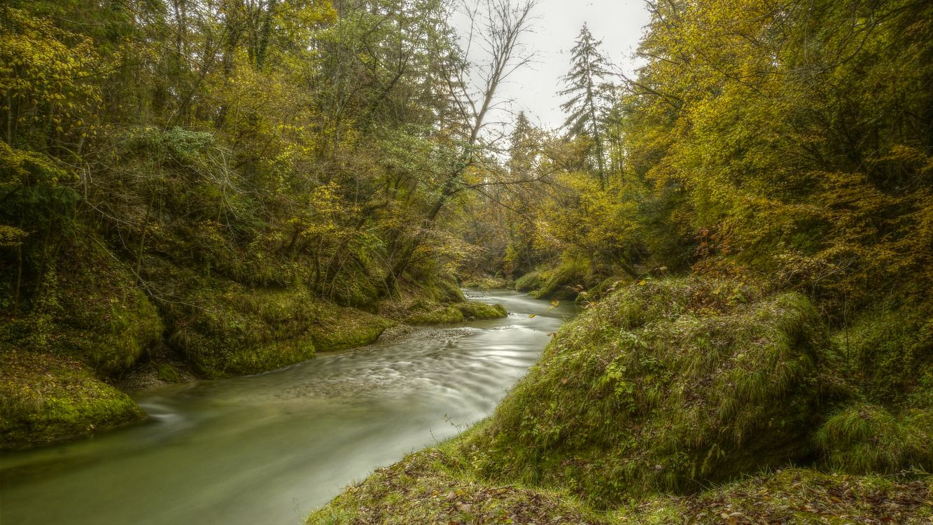 Заставка деревья, река на телефон