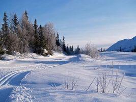 Бесплатные фото зима,снег,деревья,сугробы,следы,горы,холмы