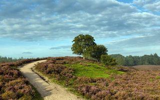 Бесплатные фото холм,дорога,полевая,трава,деревья,небо,облака