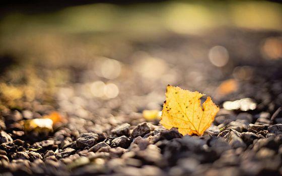 Фото бесплатно осенние настроение, листик, камушки
