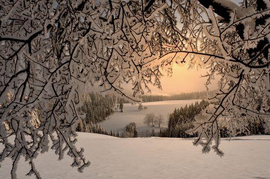 Фото бесплатно зима, деревья, холмы