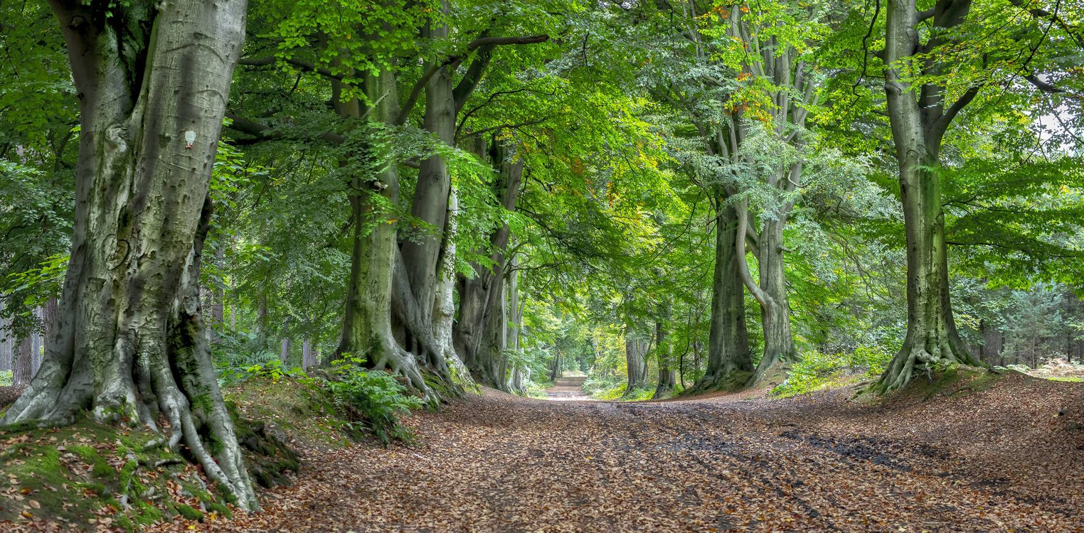 Заставка дорога, деревья на рабочий стол