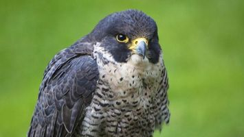 Бесплатные фото птица,клюв,глаза,крылья,перья,окрас