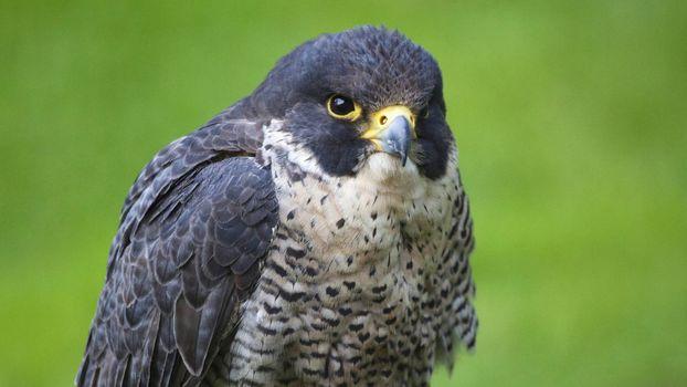 Фото бесплатно птица, глаза, перья