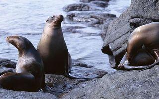 Бесплатные фото морские котики,морды,усы,ласты,берег,камни