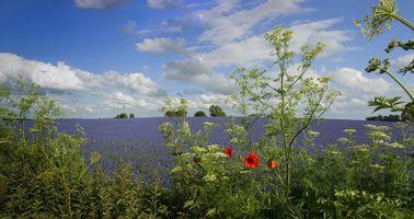 Бесплатные фото поле,растения,цветы,природа