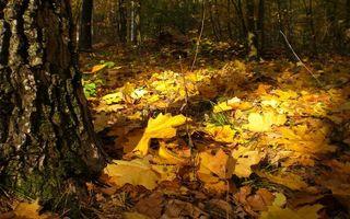 Фото бесплатно осень, лес, деревья, листва сухая, трава, ветки