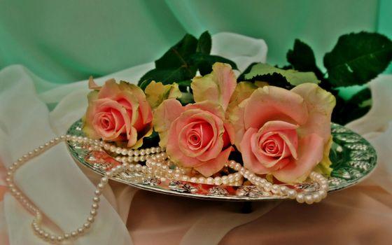Фото бесплатно поднос, розы, лепестки