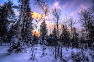 Заставки зима,закат,снег,лес,деревья,пейзаж