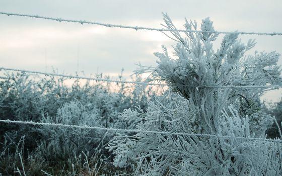 Бесплатные фото зима,мороз,кустарник,проволока,иней,небо