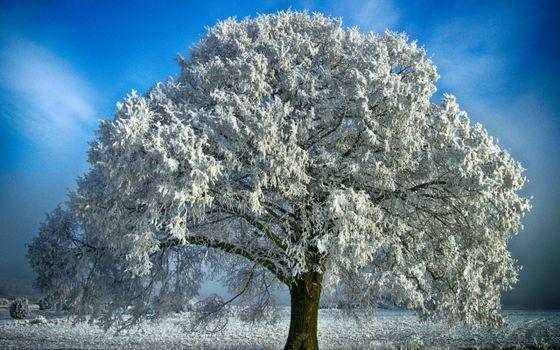 Бесплатные фото дерево,большое,листва,снег