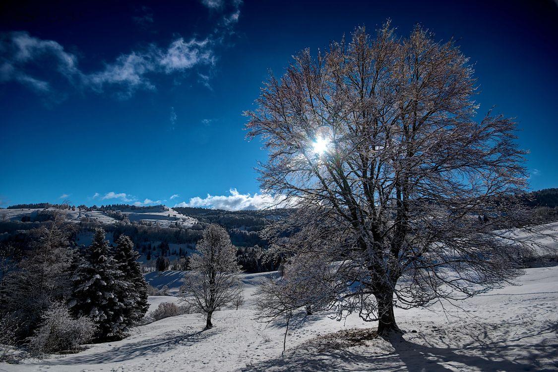 Фото бесплатно зима, снег, горы, холмы, деревья, пейзаж, пейзажи